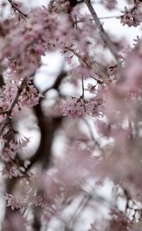 まゝに/4月の散策 茨城 - Maruの/ まゝに