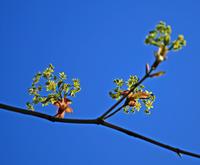 小さな花が好き - イーハトーブ・ガーデン