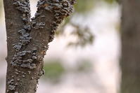 代り映えしませんが!【コゲラ・メジロ・オオアカハラ・カイツブリ】 - 鳥観日和