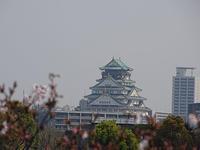 大阪市桜ノ宮にサクラ見に行きました。 - 写真で楽しんでます! スマホ画像!