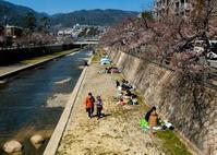 わが町の桜風景 ① - 写真の散歩道