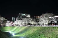 三の丸の夜桜 - フェイズと写真と時々・・・!