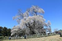 戸津辺の桜 - フェイズと写真と時々・・・!