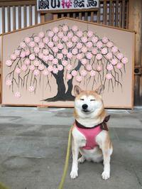 しだれ桜とフクちゃん〜足羽山のしだれ桜〜 - 日々ニコニコ