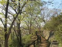弘明寺公園と大岡川の春 - 神奈川徒歩々旅