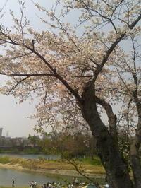 お花見 - Strike while the iron is hot.