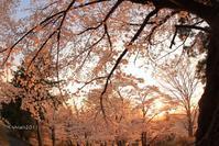 特別撮影会~夜の撮影会~ in 足利公園(古墳の丘) - 日々の贈り物(私の宇都宮生活)
