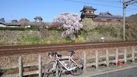 桜ポタ本番は火曜日に… - 50からの足習い