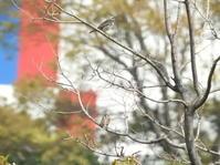 今日の野鳥公園 - THE 鳥☆鉄