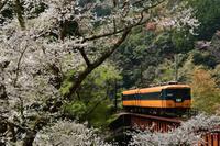 大井川鉄道の桜 - HIROのフォトアルバム