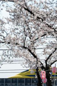 桜 - ★まなブログ★