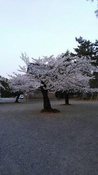 群馬県太田市呑龍様にて桜を見る会結成 - 占い師 鈴木あろはのブログ