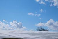 春の景色と雪景色のマイルドセブンの丘~4月の美瑛 - My favorite ~Diary 3~