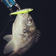 やっと釣れたけど、、、 - 広島の〜中学生Seabass angler