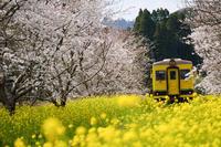 いすみ鉄道、春爛漫~Ⅱ - :Daily CommA: