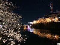 夜桜~福井城址~山里口御門 - 日だまりカフェ