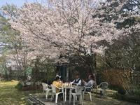 桜の下  同窓生 - 旅と数学  それとdiy