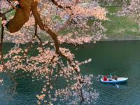【お花見】千鳥ヶ淵へ - casa del sole