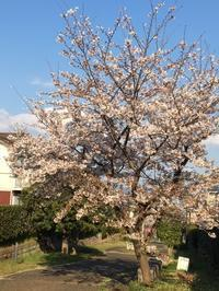 春no庭No.1 - グリママの花日記