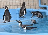 2019年3月王子動物園2その2 いってらっしゃい出目丸 - ハープの徒然草