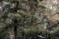 吹雪 - memory