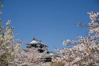 松山城 桜風景② - かたくち鰯の写真日記2