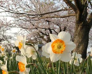 春本番! -
