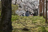 桜 - 高原に行きたい