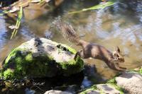 井の頭自然文化園2019年4月3日 - お散歩ふぉと2