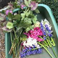 春のガーデン作業 - 花の庭づくり庭ぐらしガーデニングキララ