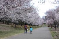 桜の下でお弁当 - 風の彩り-2