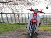 桜と菜の花ツーリング♪ - ちまんじのカブ日記