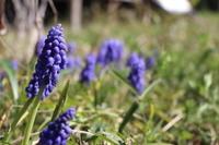 清明:種下ろしの季節となりました。(3日〜7日) - 週刊「目指せ自然農で自給自足」