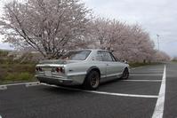 桜満開! - ハコスカ写真館