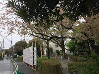 小田急線が止まった! - マイニチ★コバッケン