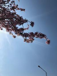 春ですね - デンな生活