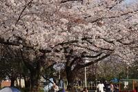 足立区の街散歩377「葛飾区篇」 - 一場の写真 / 足立区リフォーム館・頑張る会社ブログ