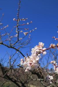 春の訪れ - マスター写真館2