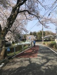 花見は自転車に限る by 局長 - [YOC]山おやじブログ