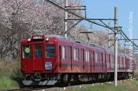また今日も桜コラボ - きょうはなに撮ろう