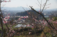 桜井市三輪 - ぶらり記録:2 奈良・大阪・・・