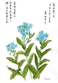 忘れない「忘れな草」 - がちゃぴん秀子の日記