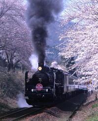 桜に囲まれ - 蒸気屋が贈る日々の写真-exciteVer