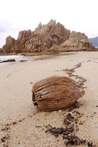 ココヤシ - Beachcomber's Logbook