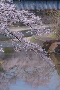 ご近所*SAKURA - 気ままにお散歩