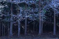 精霊の林 - 赤煉瓦洋館の雅茶子