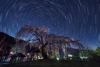 眠らぬ枝垂れ桜 - Qualia