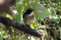 週末の鳥見ing20190406-07 - 田舎のじーじのつぶやき