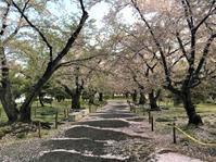 """桜も…頑張っています(^_^) - 西薗守の""""子育て"""""""