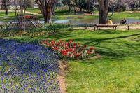 渓流広場のチュウリップ - あだっちゃんの花鳥風月
